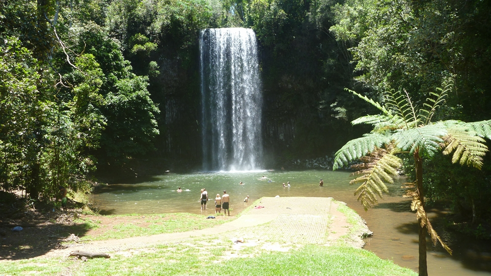 Millaa Millaa .. Waterfall Circuit.