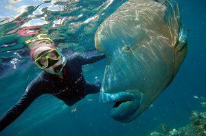 Ningaloo Reef, Western Australia