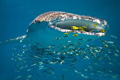 Ningaloo Reef – Western Australia.