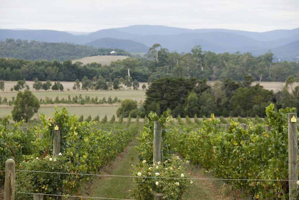 Beechworth, Wine Region