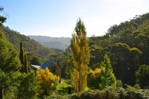 Adelaide Hills ForestRange