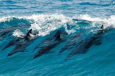 Yorke Peninsular – Copper Coast – South Australia